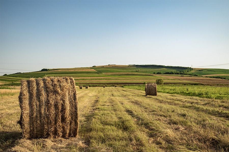 Rural Hay Field
